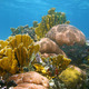 Underwater landscape in a colorful coral reef - PhotoDune Item for Sale