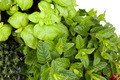 Thyme Mint Basil - PhotoDune Item for Sale