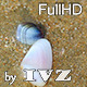 Clams - VideoHive Item for Sale