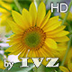 Decorative Sunflower - VideoHive Item for Sale