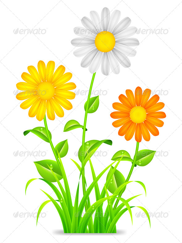 GraphicRiver Daisy Chamomile Flowers 7327908