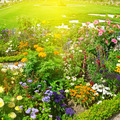 beautiful flower garden and sunrise - PhotoDune Item for Sale