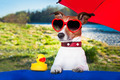 summer dog under umbrella - PhotoDune Item for Sale