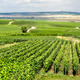 Vineyard landscape, Montagne de Reims, France - PhotoDune Item for Sale