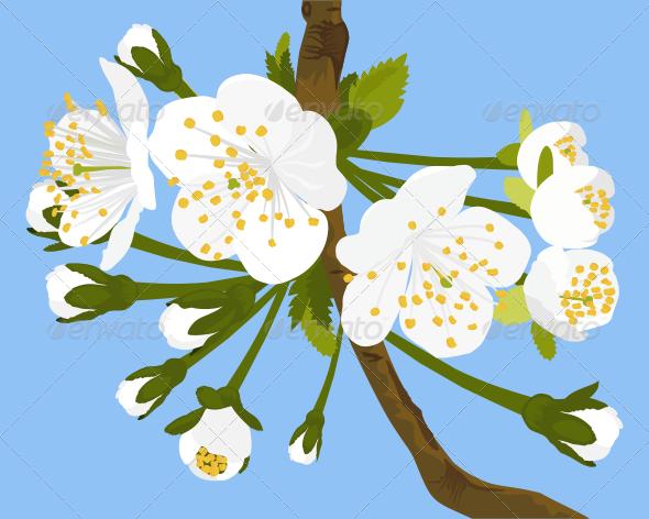 GraphicRiver Cherry Blossom Vector Illustration 7342964