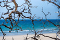 Dead trees on the beach with blue sea background. - PhotoDune Item for Sale