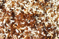 Red ants with white eggs - PhotoDune Item for Sale