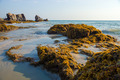 Rocks and seaweed (Sargassum sp.), Phang Nga - Thailand. - PhotoDune Item for Sale
