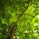 foliage of a tree - PhotoDune Item for Sale