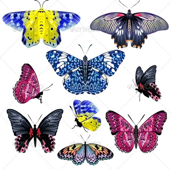 GraphicRiver Set of Colorful Realistic Isolated Butterflies 7351867