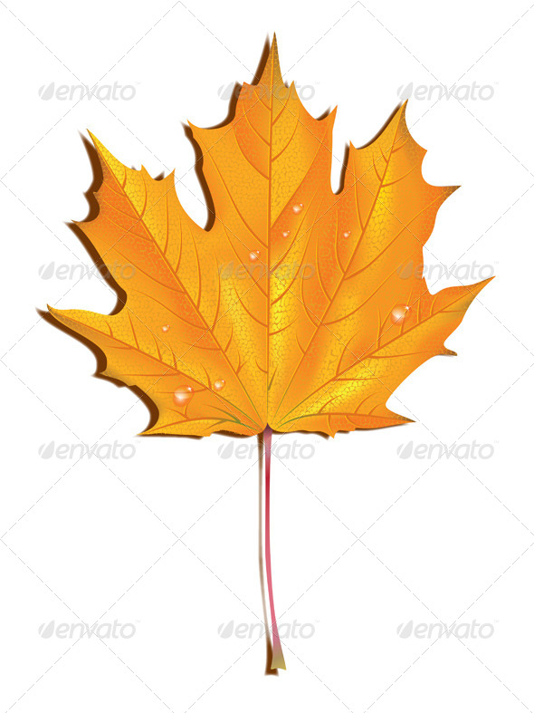 GraphicRiver Maple Autumn Leaf 7358039
