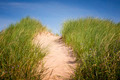 Path over sand dunes with grass - PhotoDune Item for Sale