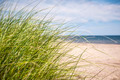 Beach grass - PhotoDune Item for Sale