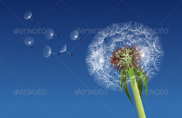 GraphicRiver Dandelion Seeds Blown in the Blue Sky 7361695