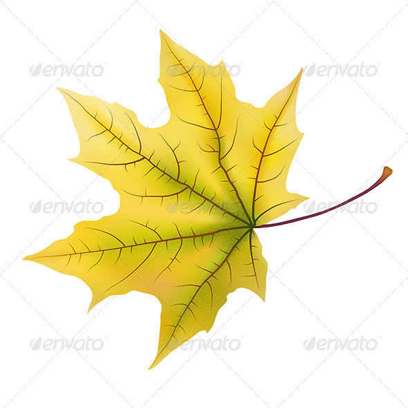 GraphicRiver Maple Leaf 7363507