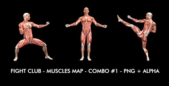 VideoHive Fight Club Muscles Map Combo #1 7365825
