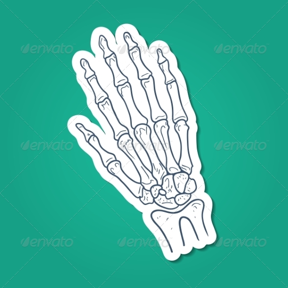 GraphicRiver Bones of Hand Skeleton Part 7365944