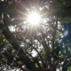 Sun Through Tree - VideoHive Item for Sale
