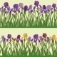 Flowers Iris Set Seamless - GraphicRiver Item for Sale