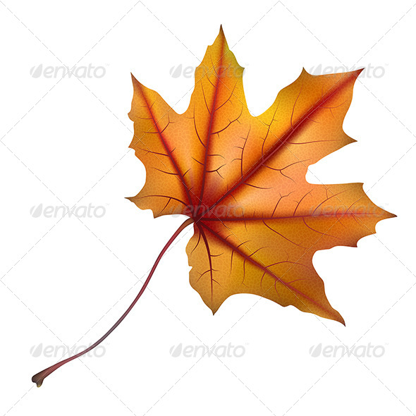 GraphicRiver Maple Leaf 2 7384146