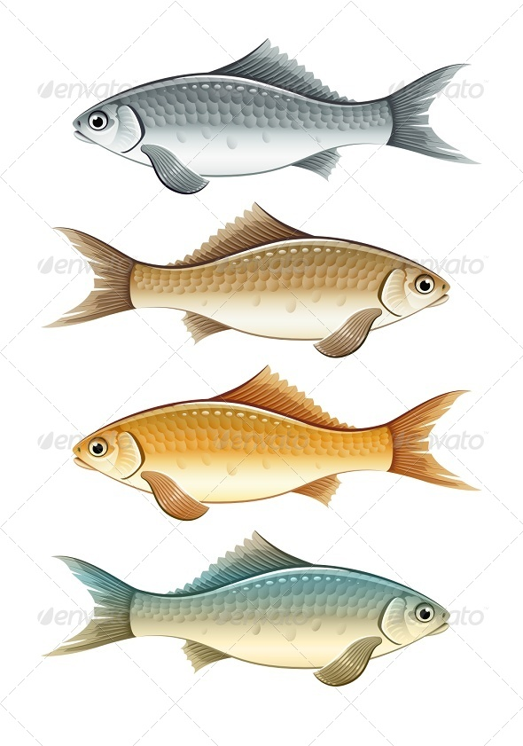 GraphicRiver Set of Live Colour Fish 7386162