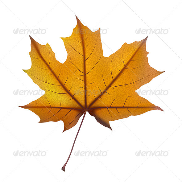 GraphicRiver Maple Leaf 3 7393146