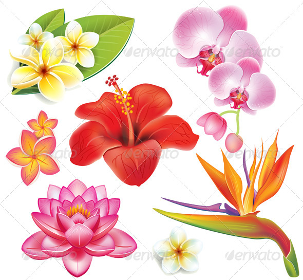 GraphicRiver Set of Tropical Flowers 7397956