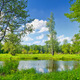 Summer Landscape With Lonely Tree and Blue Sky. The Narew River Nature Reserve. - PhotoDune Item for Sale