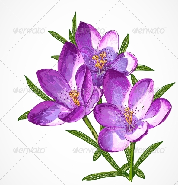 GraphicRiver Crocus Spring Flowers for your Design 7403904