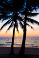 sunset and beach. view of a beach with palm trees - PhotoDune Item for Sale