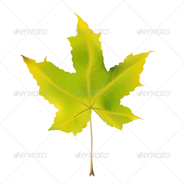 GraphicRiver Maple Leaf 4 7412526
