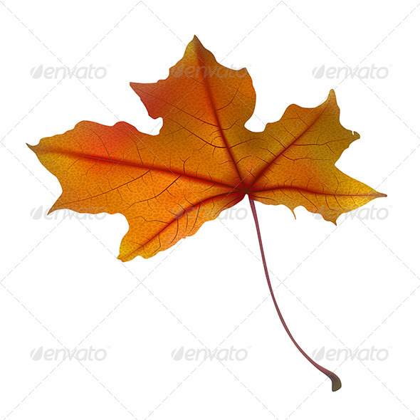 GraphicRiver Maple Leaf 5 7412657
