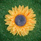 Sunflower on artificial grass - PhotoDune Item for Sale