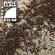 Anthill with Ants - VideoHive Item for Sale