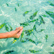 Feeding tropical fishes in the water - PhotoDune Item for Sale