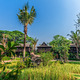Green rice field in the villa,Thailand - PhotoDune Item for Sale