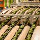 Linepack Industry Fruit Avocados - VideoHive Item for Sale