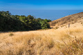 Alpine savanna grassland of Doi Inthanon, Chiang Mai, Thailand - PhotoDune Item for Sale