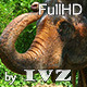 Washing The Elephant - VideoHive Item for Sale