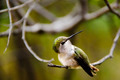 Portrait of a Hummingbird - PhotoDune Item for Sale