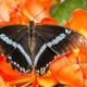 Swallowtail Butterfly - PhotoDune Item for Sale