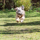 Jumping Dog - PhotoDune Item for Sale