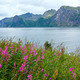 Summer Senja coast (Norway) - PhotoDune Item for Sale