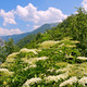 Landscape with elder flower - PhotoDune Item for Sale