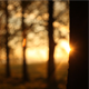 Forest in The Sunset 1 - VideoHive Item for Sale