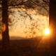 Forest in the Sunset 2 - VideoHive Item for Sale