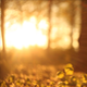 Forest in the Sunset 3 - VideoHive Item for Sale