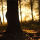 Forest in the Sunset 4 - VideoHive Item for Sale