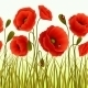 Poppy Wallpaper - GraphicRiver Item for Sale