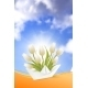 Summer Card with White Tulips - GraphicRiver Item for Sale